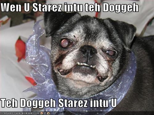 Cheezburger Image 1625796352
