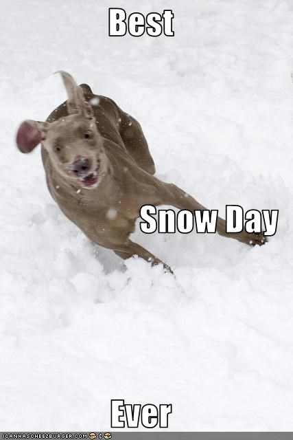 excited,outside,snow,whippet
