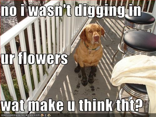 dirty,FAIL,flowers,labrador,lies,mess