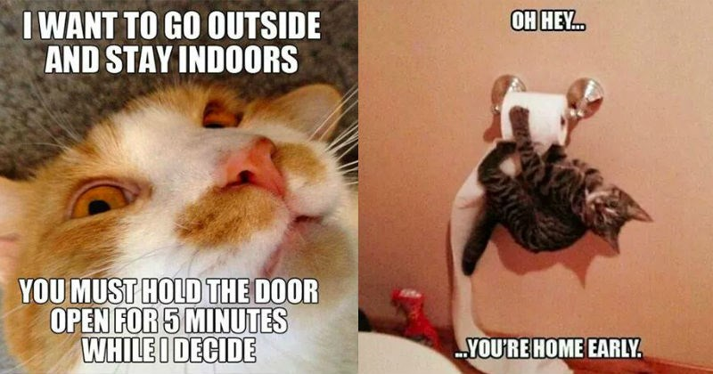funny cat memes designed to make you lol - cover meme of cat that wants to both stay outside and come indoors, and another cat climbing the toy paper roll and captioned that you are home early.