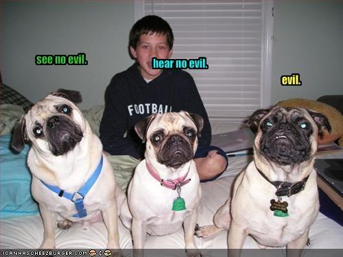 evil pug - 1633139968