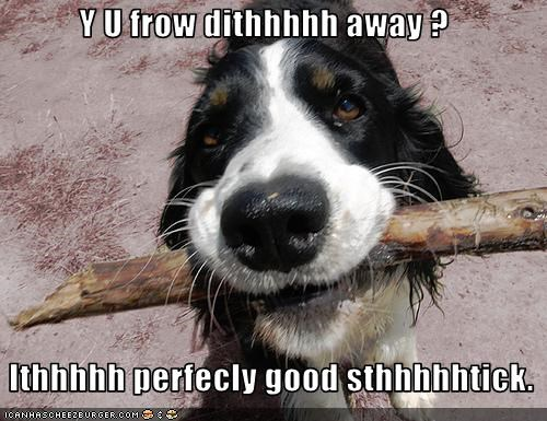border collie confused outside stick - 1635467520