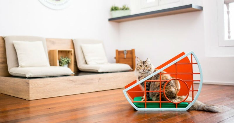 furniture pets design Cats - 1635845