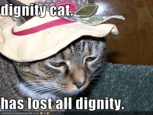 dignity cat.  has lost all dignity.