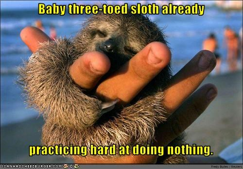 Baby three-toed sloth already     practicing hard at doing nothing.