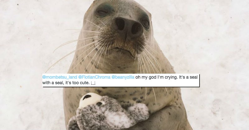 twitter,stuffed animal,seal,cute