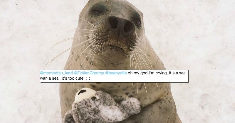 twitter stuffed animal seal cute - 1642501