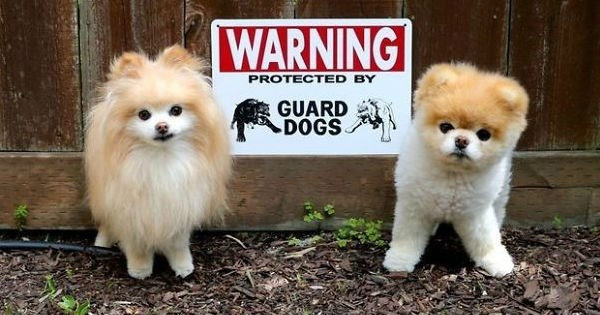 dogs,beware of dog,beware,signs,funny