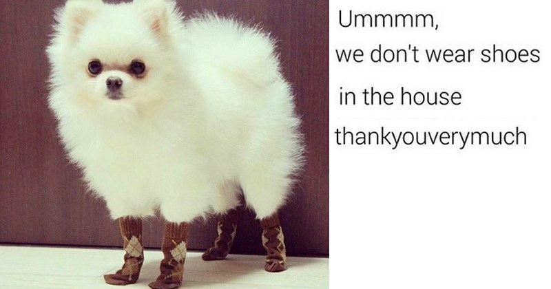 Memes,doggo,meme list