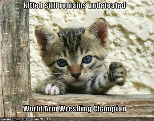 cute,kitten,wrestling