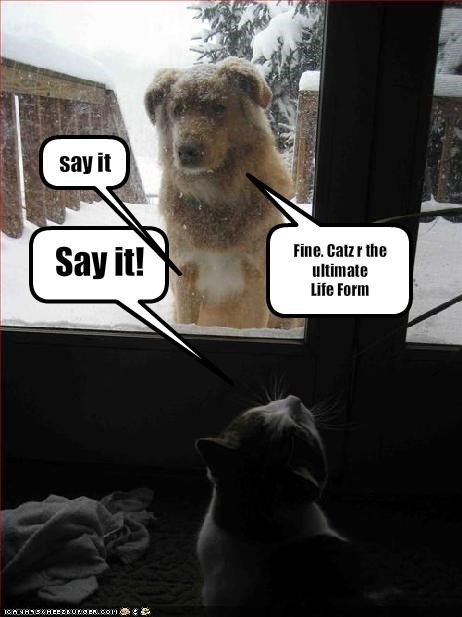 door indoors lolcats outdoors snow whatbreed windows