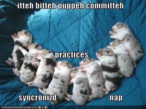 cute puppy sleeping whatbreed - 1655767296