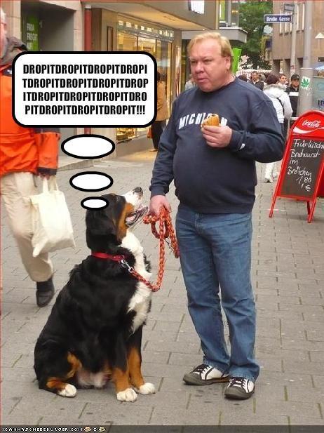 Cheezburger Image 1655925504