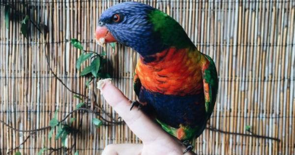 birds colorful rainbow - 1656581