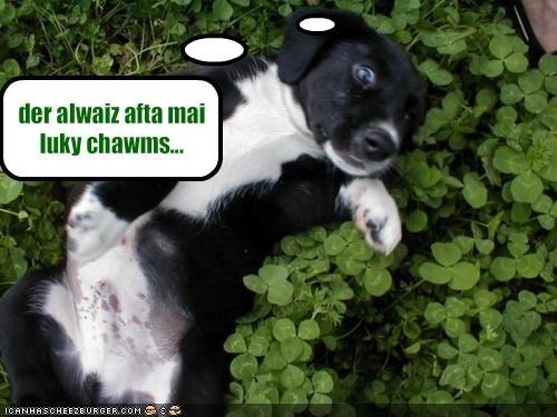 Cheezburger Image 1658384128
