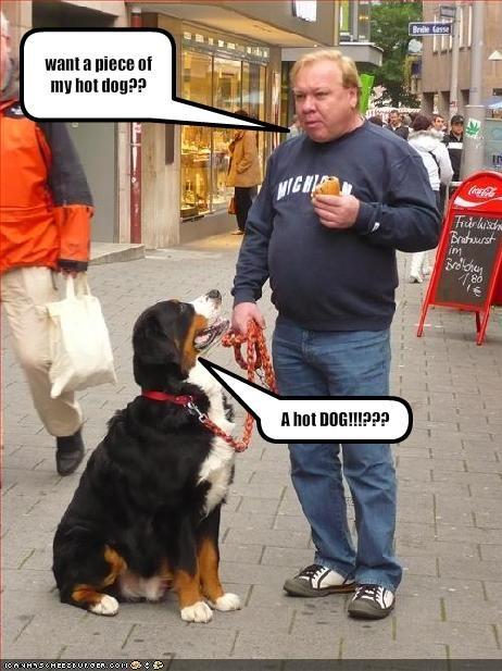 Cheezburger Image 1658439424