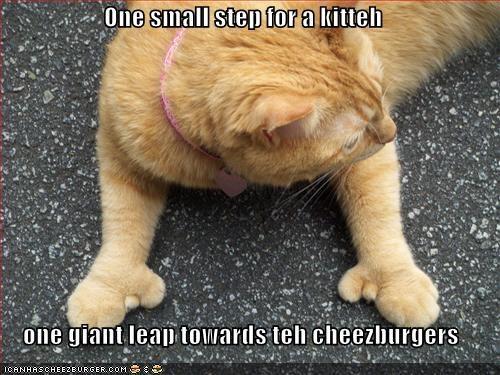 Cheezburger Image 1660382976
