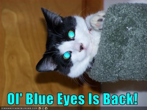 Ol' Blue Eyes Is Back!