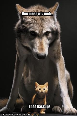 cute kitten lolwolves security system threats
