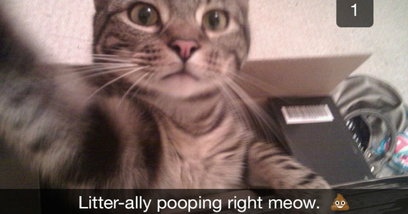 cat snapchats | Litter-ally pooping right meow. funny selfie that looks like it was taken by a cat sitting in a box