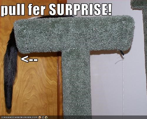 pull fer SURPRISE!        <--