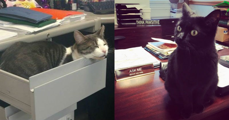 work Business Cat Office Cats - 1665541