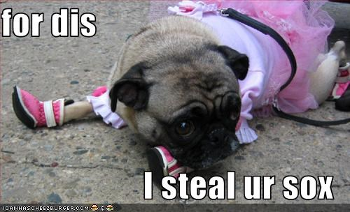 costume,pug,revenge,socks,stealing