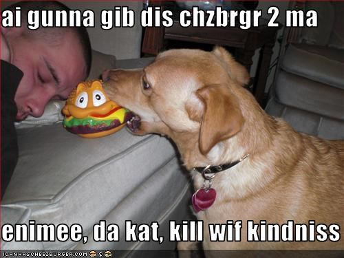 Cheezburger Image 1667198208