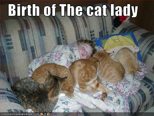 baby couch crazy cat lady ginger - 1667327232