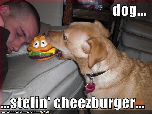 Cheezburger Image 1667583744