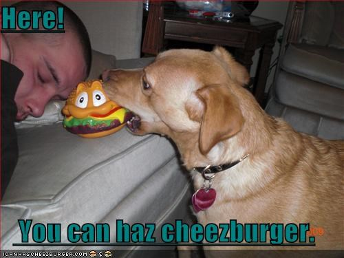 Cheezburger Image 1667722496