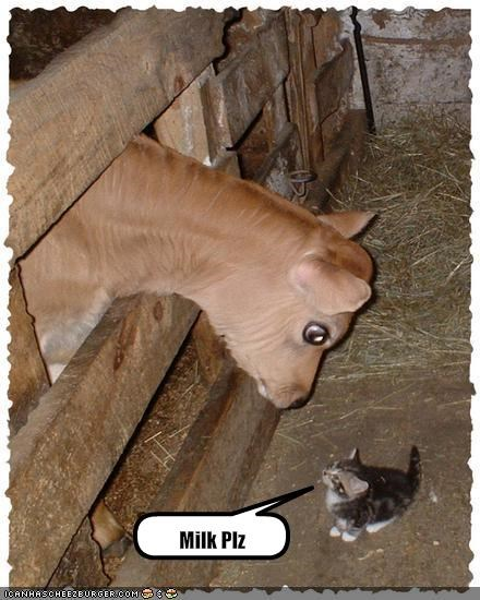 cute,kitten,lolcows,milk