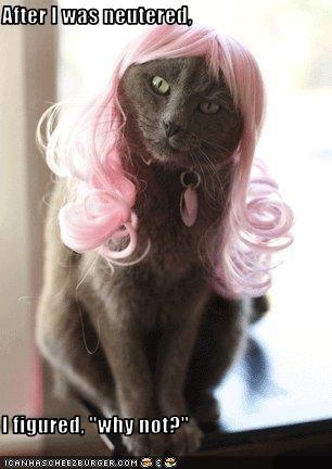 costume neutered wig - 1668805376