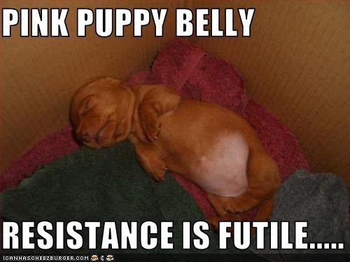 belly bellyrub puppy whatbreed - 1669280000