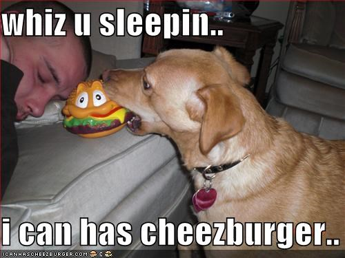Cheezburger Image 1669911808