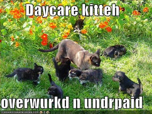 cute,daycare,kitten,mischief,outside,work