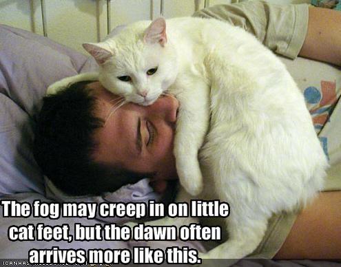 annoying bed hooman human nap sleeping - 1670745344