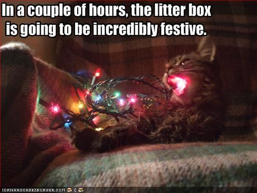 lights,litterbox,nom nom nom,uh oh