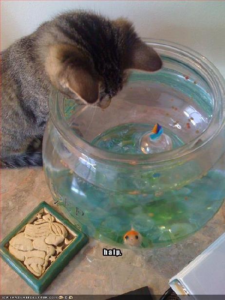 Fishbowl halp lolfish murder nom nom nom - 1671502592