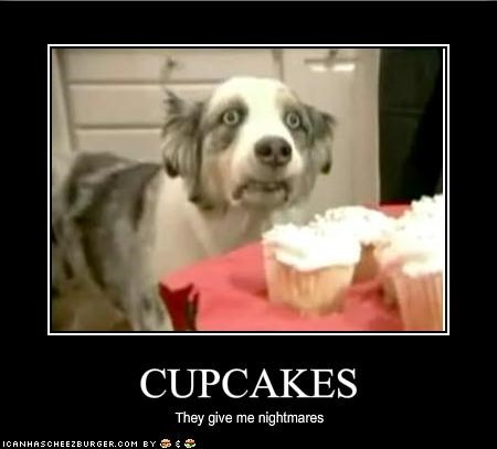 australian shepherd,cupcake,kitchen