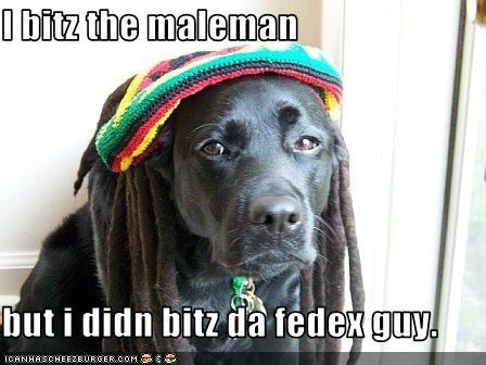 bite bob marley costume hat labrador - 1671550720