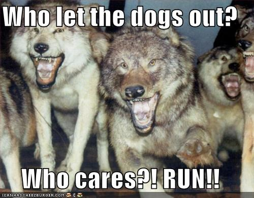 Who let the dogs out?  Who cares?! RUN!!