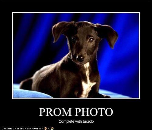 prom school whatbreed - 1672453376