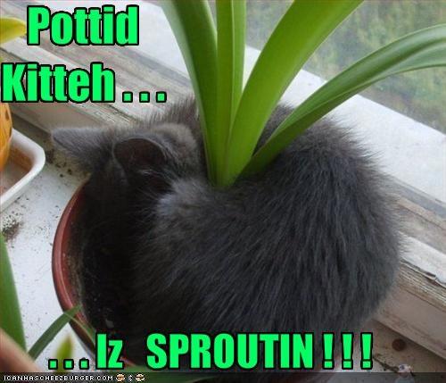 cute nap plants - 1672973568