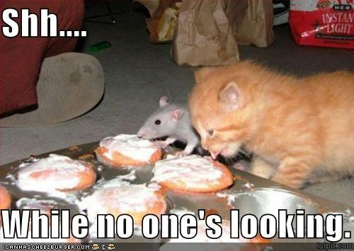 cupcake,cute,kitten,lolrats,nom nom nom