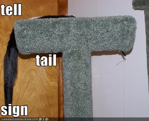 tell             tail sign