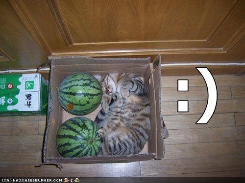 Cheezburger Image 1674132224
