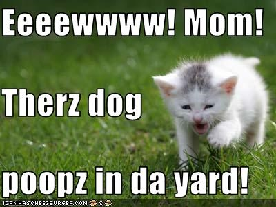 eww grass kitten loldogs poop - 1674668288