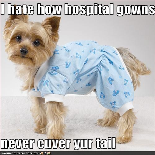 gowns,hospital,puppy,yorkshire
