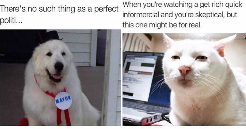 dogs too real Memes Cats funny animals - 1677829